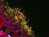 BASSEKOU KOUYATE & NGONI BA @ FUJI ROCK FESTIVAL '13 LIVE REPORT
