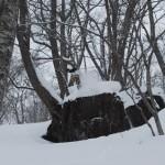 猿谷 至亮 (snow boarder)