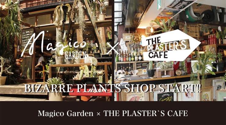 Magico garden × Magico  hair