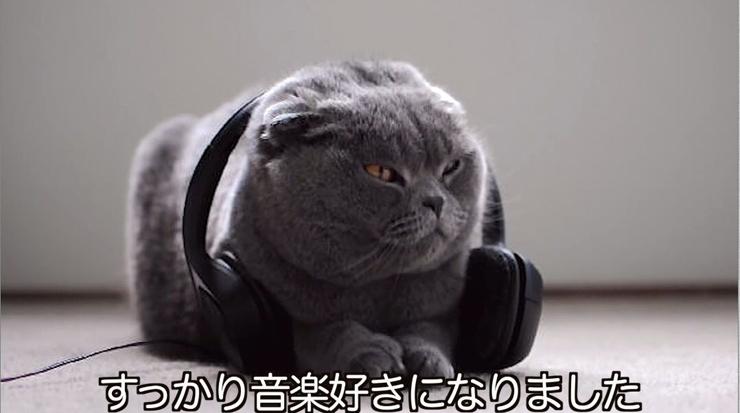 デヴィッド・タイ『ねこのための音楽 - Music For Cats』Release