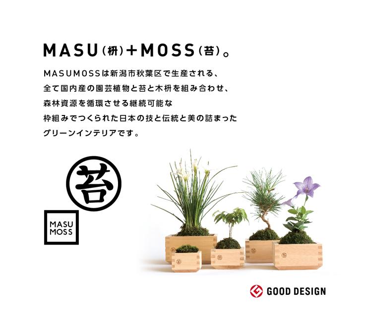 『似て非なる、盆栽。~非盆(HIBON) 展示発表会』2018年4月1日(日)~4月30日(月)at CPCM(CIAO PANIC COUNTRY MALL)