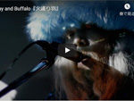 Day and Buffalo『火護り羽』MUSIC VIDEO