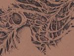HANABIS – New Album『あさがくれば』Release