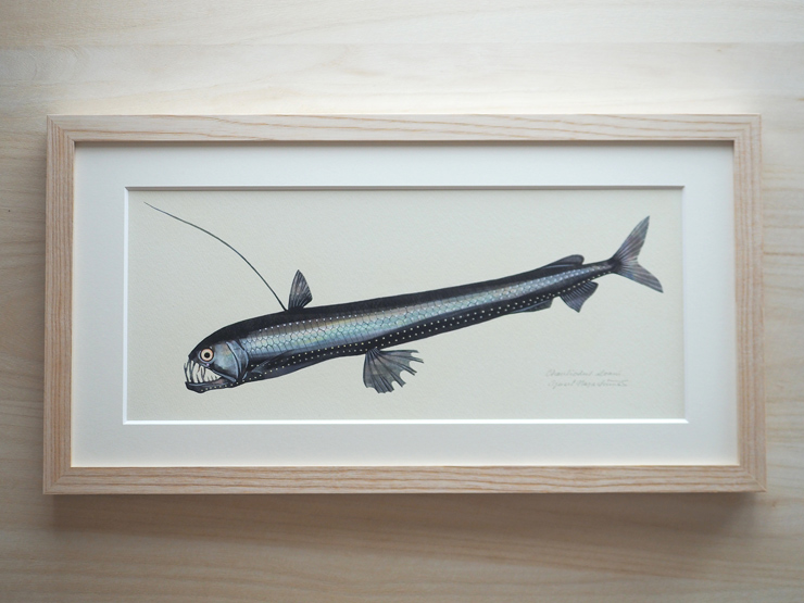 「ホウライエソ」(学名: Chauliodus sloani  ) サイズ(額装) W528mm×H278mm